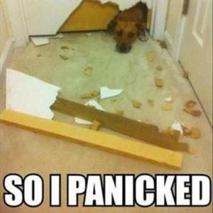 dog-so-i-panicked